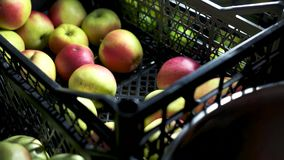 Χέρι που παίρνει τα μήλα από το κλουβί απόθεμα βίντεο