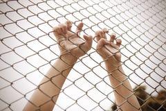 Χέρι που πιάνει το κλουβί πλέγματος Ο φυλακισμένος θέλει την ελευθερία Στοκ εικόνα με δικαίωμα ελεύθερης χρήσης