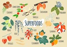 Χέρι που σύρεται διανυσματικό superfoods διανυσματική απεικόνιση