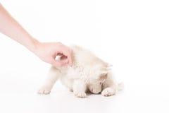 Χέρι που το γεροδεμένο κουτάβι που μυρίζεται Στοκ φωτογραφία με δικαίωμα ελεύθερης χρήσης