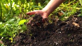 Χέρι που τραβά μια πατάτα από το χώμα απόθεμα βίντεο