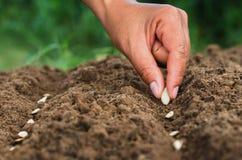 Χέρι που φυτεύει το σπόρο κολοκύθας του κολοκυθιού στοκ φωτογραφία