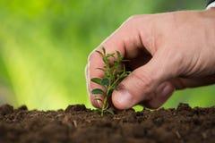 Χέρι προσώπων που φυτεύει το μικρό δέντρο Στοκ Εικόνες