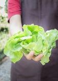 Χέρι στην ομάδα λαχανικού σαλάτας Στοκ εικόνα με δικαίωμα ελεύθερης χρήσης