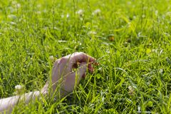 Χέρι στην πράσινη πολύβλαστη χλόη, έννοια χαλάρωσης και ελευθερίας Στοκ Φωτογραφία