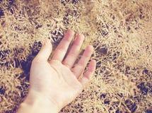 Χέρι στη χλόη φθινοπώρου στοκ εικόνα με δικαίωμα ελεύθερης χρήσης