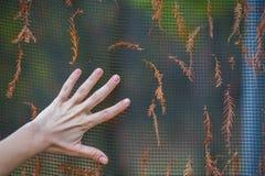 Χέρι στο φράκτη που διακοσμείται με τα ξηρά κλαδάκια Στοκ φωτογραφίες με δικαίωμα ελεύθερης χρήσης