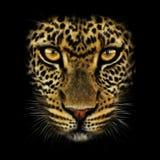 Χέρι-σχεδιασμός του πορτρέτου μιας λεοπάρδαλης στοκ φωτογραφίες