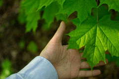 χέρι, σύνδεση με τη φύση Στοκ Φωτογραφίες