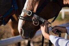 Χέρι του θηλυκού χαλιναριού αλόγων ρύθμισης κτηνιάτρων στη σιταποθήκη Στοκ εικόνα με δικαίωμα ελεύθερης χρήσης