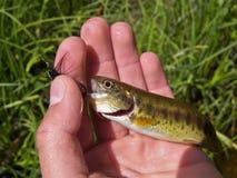 χέρι ψαριών που γαντζώνετα&iota Στοκ εικόνες με δικαίωμα ελεύθερης χρήσης