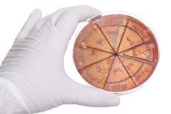 χέρι petri πιάτων γαρίφαλων Στοκ εικόνα με δικαίωμα ελεύθερης χρήσης