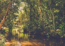Χίλιος ποταμός lingas η banteay λίμνη της Καμπότζης angkor lotuses συγκεντρώνει siem το ναό srey Καμπότζη Στοκ Φωτογραφίες
