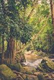 Χίλιος ποταμός lingas η banteay λίμνη της Καμπότζης angkor lotuses συγκεντρώνει siem το ναό srey Καμπότζη Στοκ φωτογραφία με δικαίωμα ελεύθερης χρήσης