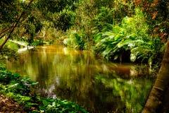 Χίλιος ποταμός lingas η banteay λίμνη της Καμπότζης angkor lotuses συγκεντρώνει siem το ναό srey Καμπότζη Στοκ εικόνες με δικαίωμα ελεύθερης χρήσης