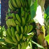 Χαβάη kauai στοκ φωτογραφία