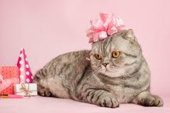 Χαιρετισμοί γενεθλίων από μια γάτα στοκ εικόνες με δικαίωμα ελεύθερης χρήσης