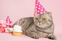 Χαιρετισμοί γενεθλίων από μια γάτα στοκ εικόνα