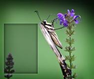χαιρετισμός καρτών πεταλούδων Στοκ φωτογραφία με δικαίωμα ελεύθερης χρήσης