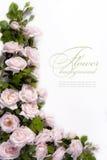 χαιρετισμός λουλουδιώ Στοκ Εικόνες