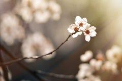 Χαιρετισμός στον ήλιο Στοκ Φωτογραφίες