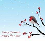 Χαιρετισμός Χριστουγέννων με την κόκκινη Robin που κάθεται στον κλάδο Στοκ Εικόνες