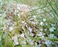 Χαλάζι στη χλόη, πράσινη χλόη που καλύπτεται με το χαλάζι Στοκ εικόνα με δικαίωμα ελεύθερης χρήσης