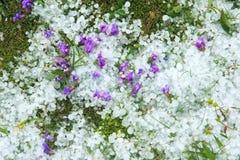 Χαλάζι Στοκ εικόνα με δικαίωμα ελεύθερης χρήσης