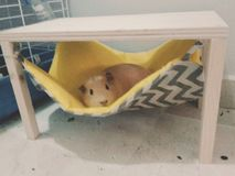 Χαλάρωση Piggy στην αιώρα Στοκ εικόνα με δικαίωμα ελεύθερης χρήσης
