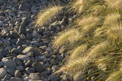 Χαλίκια και χλόη χορταριών pennisetum Στοκ φωτογραφίες με δικαίωμα ελεύθερης χρήσης