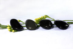 χαλίκι λουλουδιών Στοκ φωτογραφίες με δικαίωμα ελεύθερης χρήσης