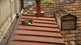 Χαλαρωμένες γάτες που κοιμούνται στα windowsills και τις στέγες σπιτιών στο Tbilisi, περιπλανώμενα ζώα απόθεμα βίντεο