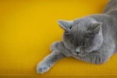 Χαλαρωμένη γάτα σε έναν καναπέ στοκ εικόνα με δικαίωμα ελεύθερης χρήσης