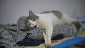 Χαλαρωμένο κατοικίδιο ζώο ύπνων γατών χασμουρητό στο σε αργή κίνηση τηλεοπτικό στο εσωτερικό τρόπο ζωής πινάκων σιδερώματος απόθεμα βίντεο
