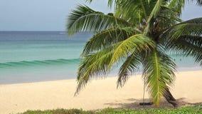 Χαλαρώστε την ταλάντευση κρεμά από το φοίνικα καρύδων στο τροπικό αεράκι του εξωτικού νησιού απόθεμα βίντεο