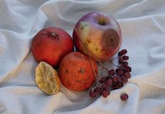Χαλασμένα φρούτα στο ύφασμα στοκ φωτογραφία