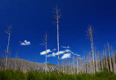 χαλασμένο δέντρο Βικτώρια & Στοκ Εικόνες