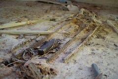 Χαλασμένο ελαφρύ προσάρτημα και έρμα και βολβοί στοκ εικόνα με δικαίωμα ελεύθερης χρήσης