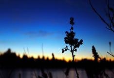 Χαμένη λιμνοθάλασσα - σκιαγραφία Στοκ εικόνα με δικαίωμα ελεύθερης χρήσης
