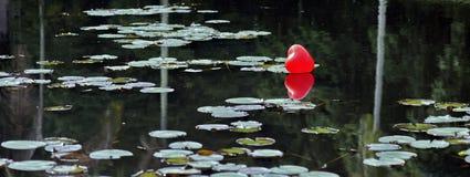 Χαμένη καρδιά στη λίμνη, μεταξύ των κρίνων νερού Στοκ Εικόνες