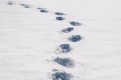 Χαμένος αλλά ζωντανός Στοκ Φωτογραφίες