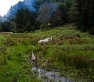 Χαμένο άλογο Στοκ φωτογραφία με δικαίωμα ελεύθερης χρήσης