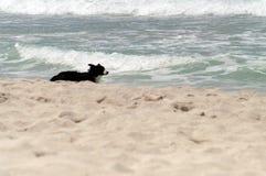 Χαμένο σκυλί Στοκ Εικόνες