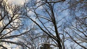 Χαμηλή γωνία υποβάθρου ημέρας δέντρων χειμερινού δασική μπλε ουρανού φιλμ μικρού μήκους