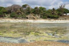 Χαμηλή παλίρροια στην παραλία Diani, η ακτή του Ινδικού Ωκεανού Κένυα στοκ εικόνα
