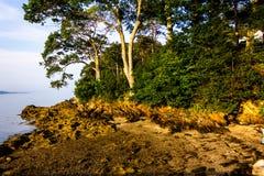 Χαμηλή παλίρροια στο νησί ξαδέλφων, Μαίην στοκ εικόνα