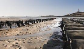 χαμηλή παλίρροια στρειδιώ Στοκ εικόνες με δικαίωμα ελεύθερης χρήσης