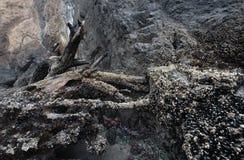 χαμηλή παλιρροιακή παλίρρ&om Στοκ εικόνα με δικαίωμα ελεύθερης χρήσης