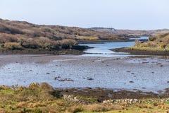 Χαμηλός κόλπος Clifden παλίρροιας στοκ εικόνα