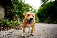Χαμηλός πυροβολισμός του ευτυχούς δραστήριου σκυλιού που περπατά υπαίθρια στοκ φωτογραφίες με δικαίωμα ελεύθερης χρήσης